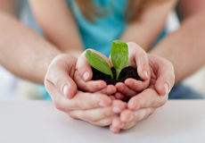 Close up of father and girl hands holding sprout Royalty Free Stock Images