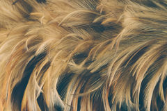 Close up Feather duster Stock Photo