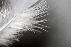 Close up of feather Royalty Free Stock Image