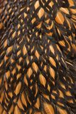 Close-up of feathers Royalty Free Stock Image