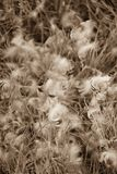 Bird feathers in grass Stock Image