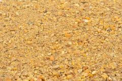 Close up of feed for hen.  royalty free stock images