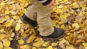 Child goes on yellow leaves in autumn, close-up. Close-up of feet of a little boy on yellow leaves in autumn Park. A little boy goes through the yellow fallen stock video footage