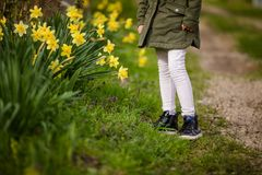 Close-up feet of little girl in the spring country on the green grass with yellow daffodils stock photography