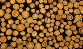 Heap of felled tree trunks. Close-up of felled trees stacked up in forest Stock Photo