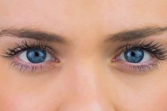 Close up of female blue eyes Stock Photography