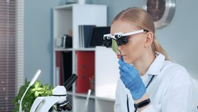 Close-up of female chemistry research scientist in magnifying eyeglasses looking on sample. In her personal gabinet in modern chemistry laboratory stock video