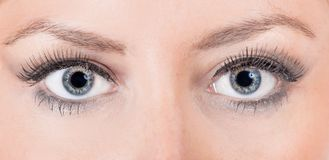 Close up of a female eyes Royalty Free Stock Photo