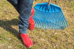 Close-up of female feet in blue jeans and red rubber boots with rakes, garden work. Close - up of female feet in blue jeans and red rubber boots with rakes Stock Images