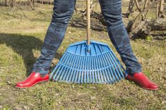 Close-up of female feet in blue jeans and red rubber boots with rakes, garden work. Close - up of female feet in blue jeans and red rubber boots with rakes Stock Image