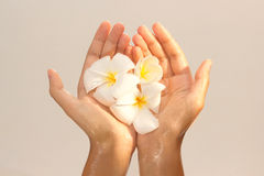 Close-up of female hands in oil holding flower on Royalty Free Stock Photos