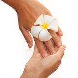 Close-up of female hands in oil holding flower on Royalty Free Stock Photography