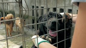 Close-up of female hands petting big black caged stray dog in pet shelter. People, Animals, Volunteering And Helping. 4K close-up of female hands petting caged stock footage