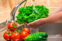 Close up of female hands washing vegetables. Under running water stock photo