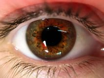 Hazel Human Eye Close Up royalty free stock image