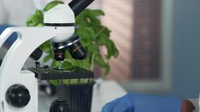 Close-up of female scientist using surgical pincers to put plant leaf on microscope stage. And then looking at it under the microscope stock video