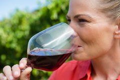 Close-up of female vintner tasting glass of wine Royalty Free Stock Photography