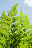 Close up of fern Stock Photos