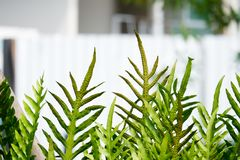 Close up of fern in blur background. royalty free stock photography
