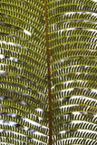 Close-up of Fern Branch Stock Photography