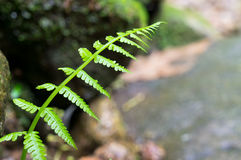 Close up of fern  Stock Photography