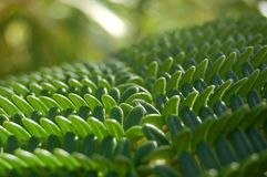 Close up of fern leaf Stock Photos