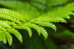 Close up of fern leaf.  Stock Photos