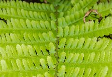 Close up of fern leaf.  Stock Image