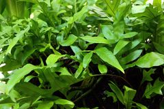 Close up fern leaf. Detail of Close up fern leaf Stock Photo