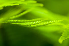 Close-up of fern leaf Royalty Free Stock Images