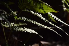 Fern leaves. Close up of fern leaves Royalty Free Stock Photo