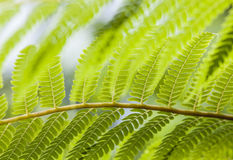 Close-up of fern leaves in tropical garden Royalty Free Stock Photos