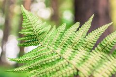 Close up of fern seeds Stock Photography