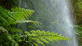 Close-up ferns with background water falling. stock footage