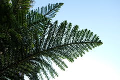 Close up ferns in the forest . stock photography