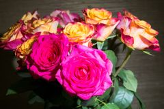 Close-up of festive fresh roses with original yellow and crimson coloration. royalty free stock images