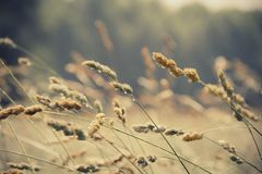 Close-Up, Field, Grass, Nature Royalty Free Stock Photos