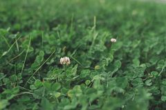 Close up field with small flower royalty free stock photography