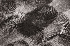 Close up of Fingerprints Royalty Free Stock Photography