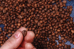 Close-up of fingers showing roasted coffee bean. With blurred other coffee beans scattered behind. Shallow depth of field focused on coffee bean. Concept of Royalty Free Stock Photos