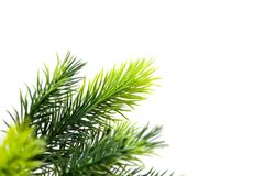 Close up of fir tree Stock Photo