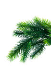 Close up of fir tree branch. Isolated on white Royalty Free Stock Images