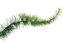 Close up of fir tree branch Royalty Free Stock Photos
