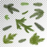 Close up of fir tree branch isolated .Vector illustration. Eps 1. A set of Christmas tree branches for a Christmas decor. Branches close-up. Vector. Drawing Royalty Free Stock Image