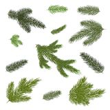 Close up of fir tree branch isolated .Vector illustration. Eps 1. A set of Christmas tree branches for a Christmas decor. Branches close-up. Vector. Drawing Stock Image