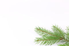 Close up of fir tree branch isolated on white Royalty Free Stock Photo