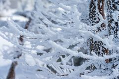 Close-up fir trees or pine trees covered by snow on the backgrou Royalty Free Stock Photos