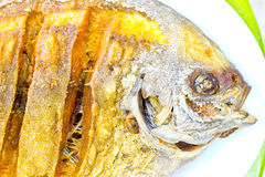 Close up fired fish Thai food Royalty Free Stock Image