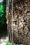 Close up of firewood cut on logs and stacked in backyard Royalty Free Stock Photos