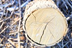Close-up firewood and tree stump. royalty free stock photo